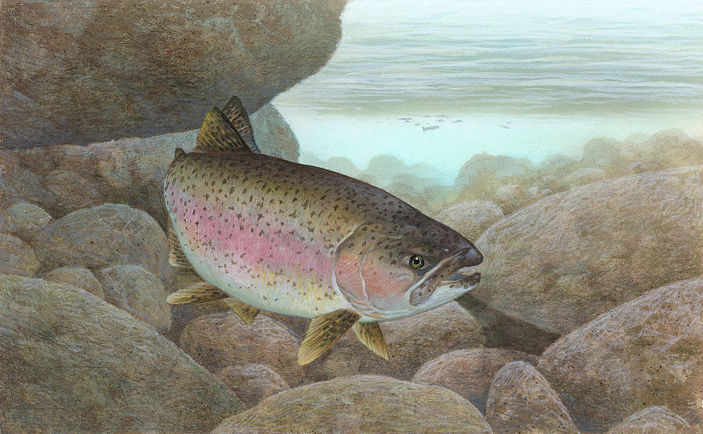 Common Prey Fish  NYS Dept of Environmental Conservation