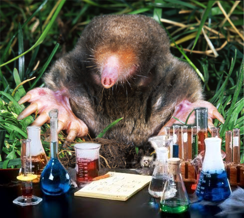 Mole chemistry project - photo#19