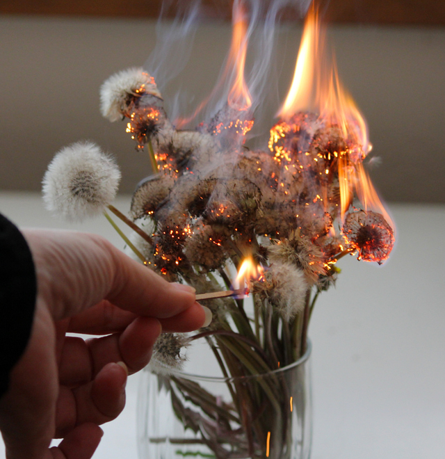 Burning Dandelions