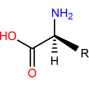 General Amino Acid Structure
