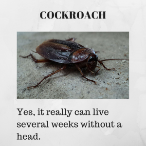 Weird Science Fact: Cockroaches can live without heads several weeks.