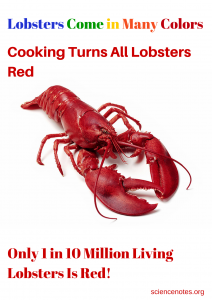Weird Science Fact: Only 1 in 10 million living lobsters is red.