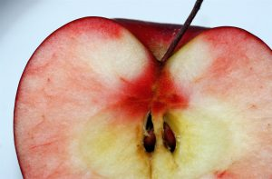 Do you think it's safe eating apple seeds or cherry pits?   (liz west)