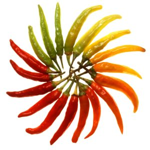 Hot peppers burn because of a chemical called capsaicin. (Scott Bauer, USDA)