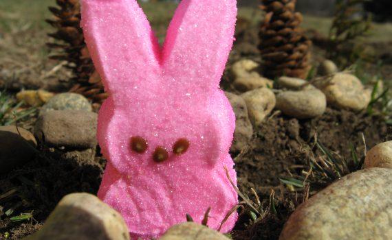 Pink Easter Rabbit Peep (Qfamily)