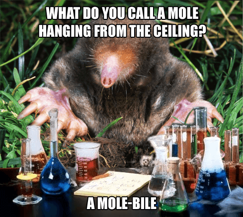 Hanging Chemistry Mole