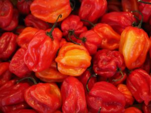 The Scoville scale is a way to measure how hot a spicy food is. The Carolina Reaper is the hot pepper with the highest Scoville rating.