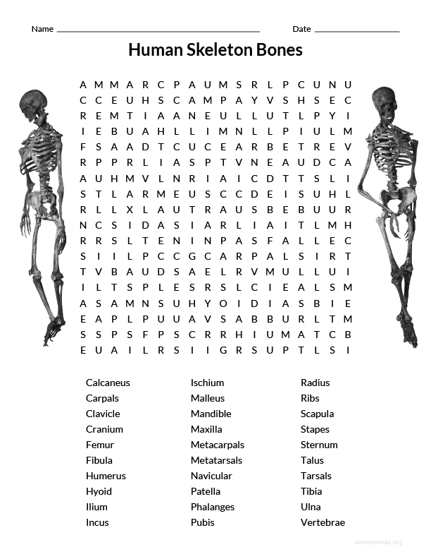 Human Skeleton Bones Wordsearch Fun Science Wordsearches