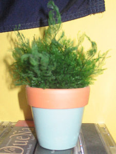 A typical air fern in a pot. (Ser Amantio di Nicolao)