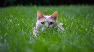 Cats eat grass because it's a good source of certain nutrients, may help their digestive system, and simply because they enjoy it. (Ethan Weil)