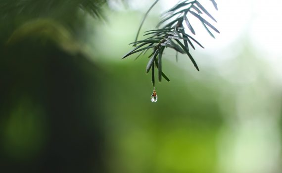 Water forms a teardrop shape just before it falls from an object. (Ed Leszczynskl)