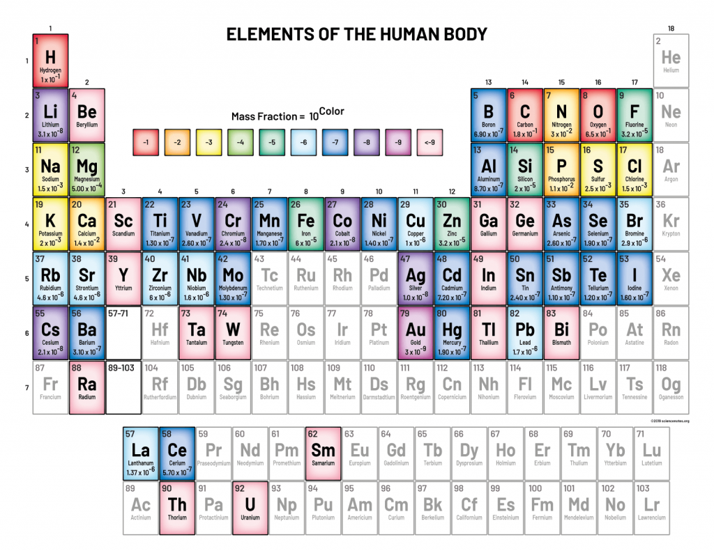 Periodic Table - Elements of the Human Body