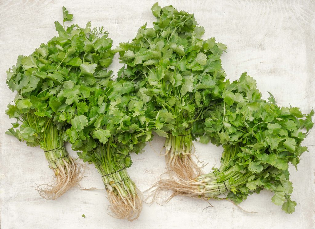 Some people think cilantro and coriander taste like soap.