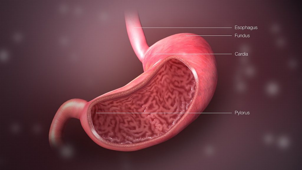 Hydrochloric acid in gastric juice gives the stomach its acidic pH.