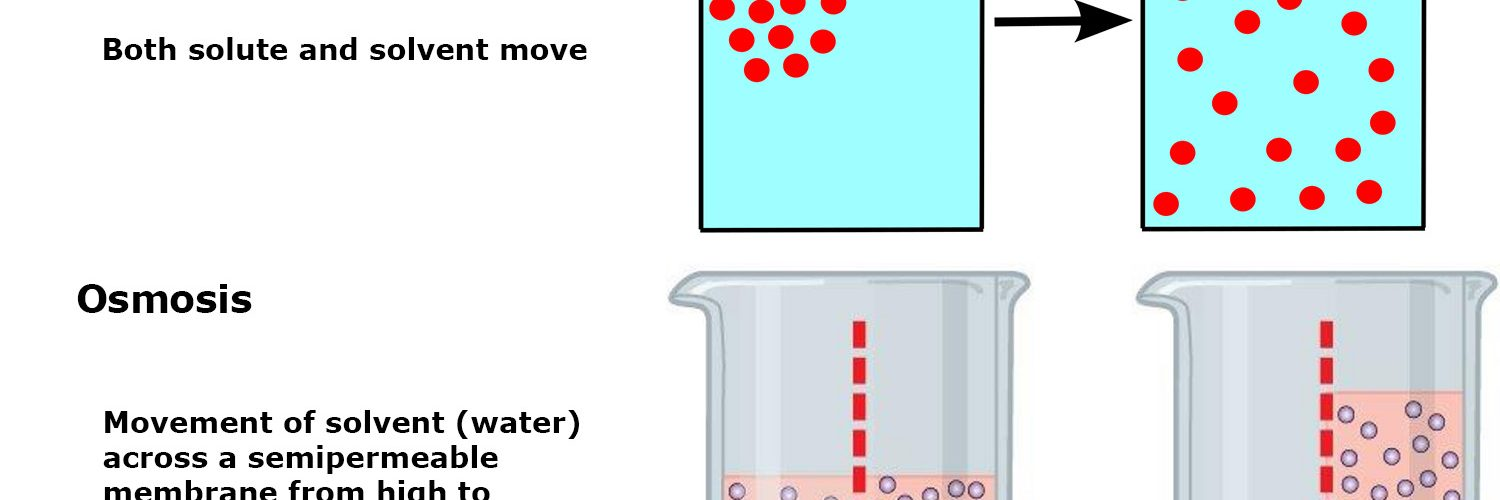 Diffusion is the movement of molecules from higher to lower concentration. In osmosis, only the solvent (water) is free to move across a semipermeable membrane from higher to lower concentration.