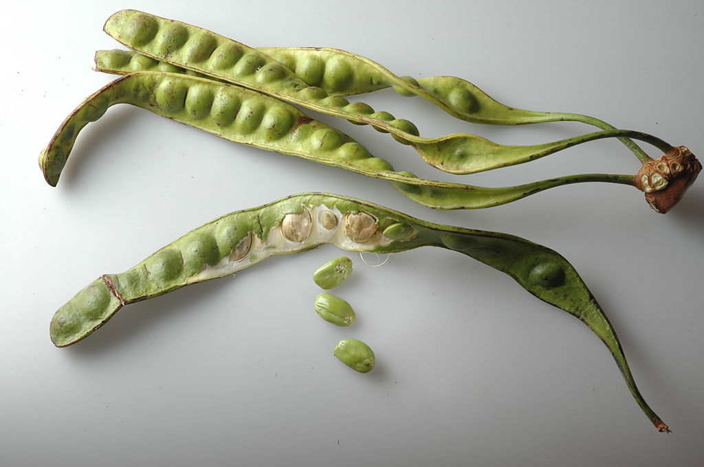 Crush pods from the stink bean plant to release a stinky, sulfurous odor.