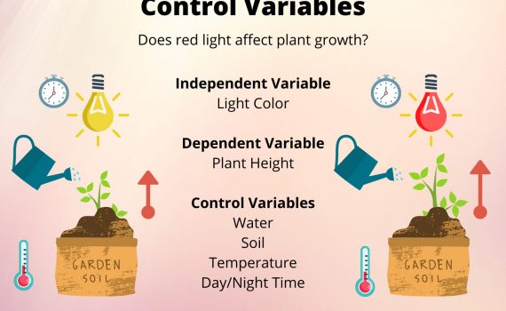 A control variable is any factor that is controlled or held constant in an experiment.