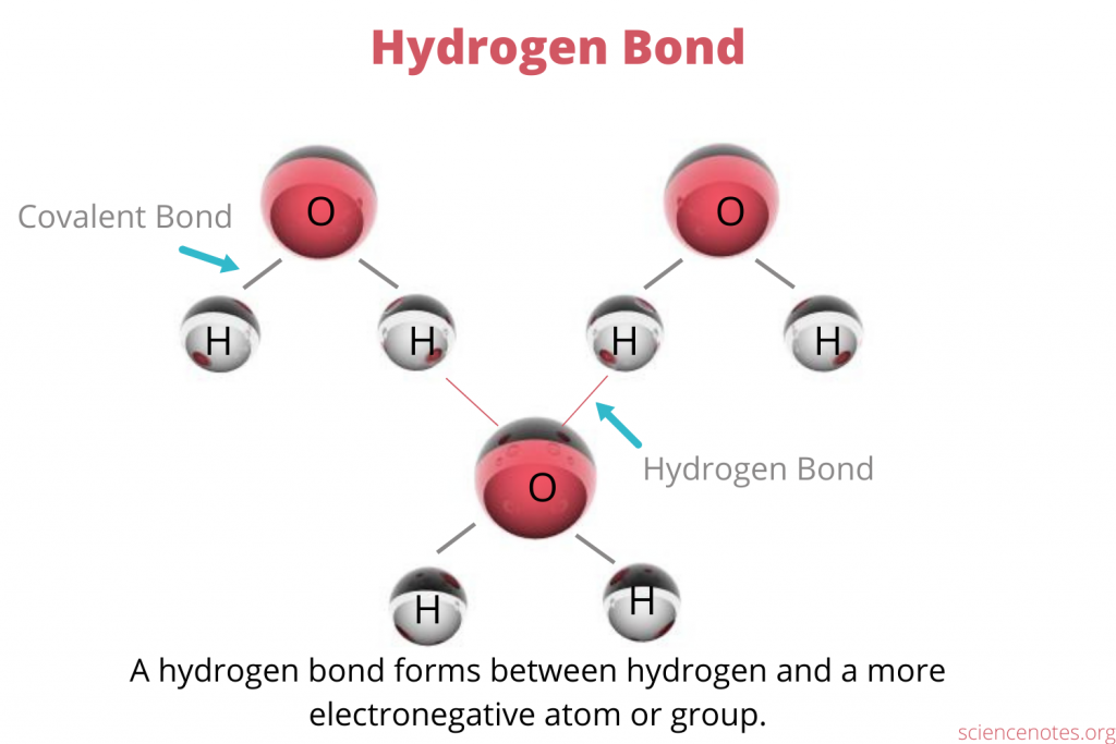 A hydrogen bond forms between hydrogen and a more electronegative atom or group of another molecule.
