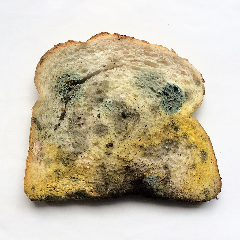 Slice of Moldy Bread