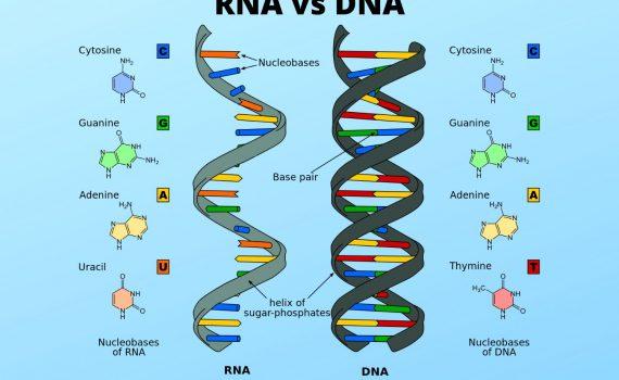 RNA vs DNA